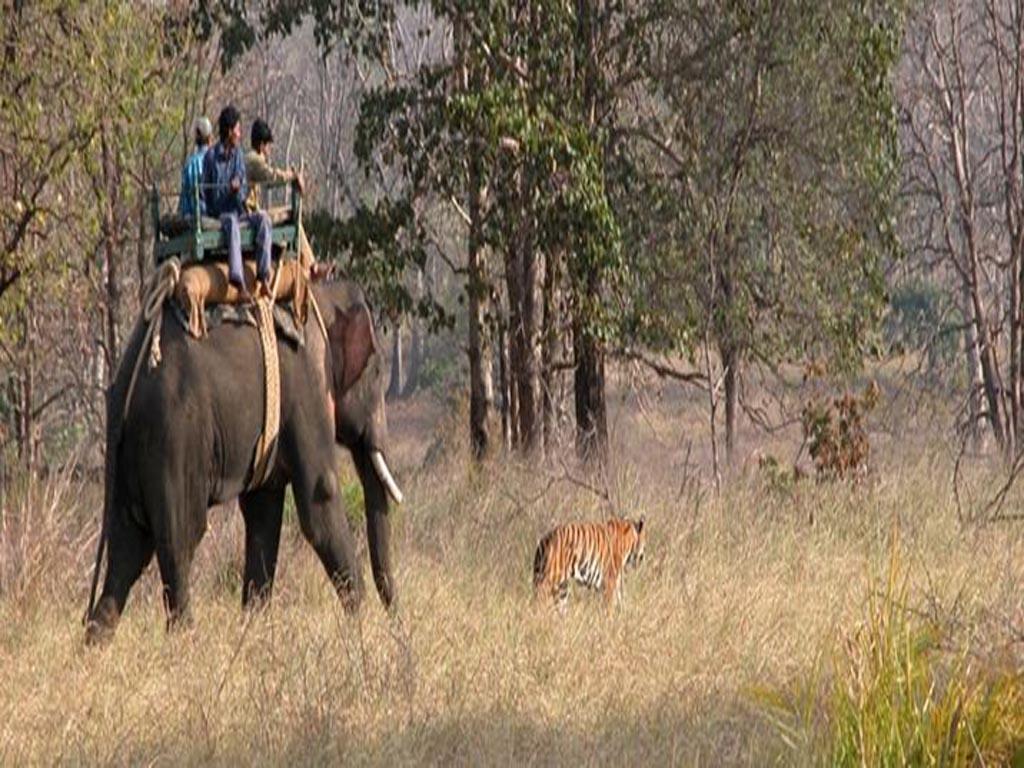 Safari d'éléphant au parc national de Kanha