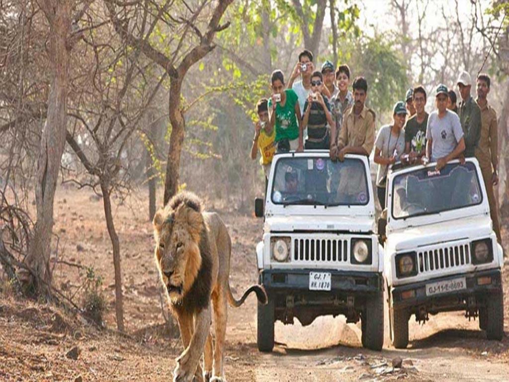 Safari en jeep à parc national de Gir