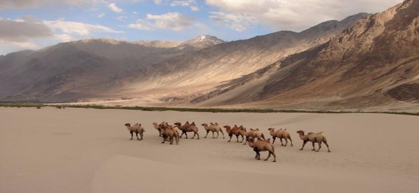 Ladakh à moto : Voyage entre ciel et terre