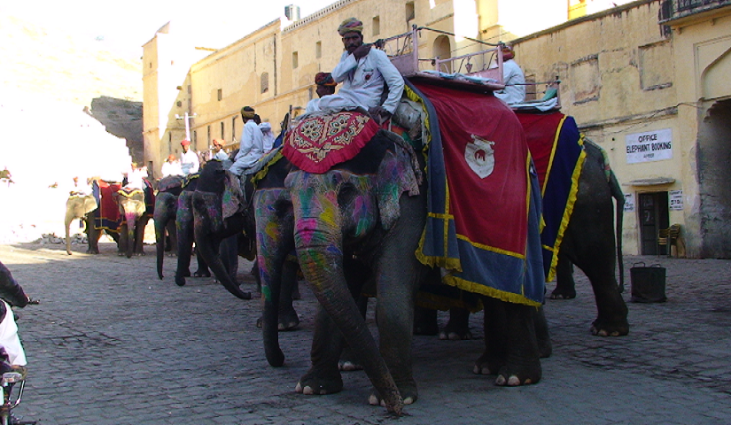 Aventure sauvage au Rajasthan